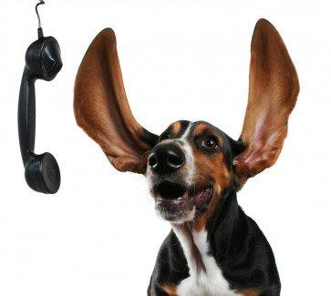 Консультация у диетолога по натуральному питанию собаки